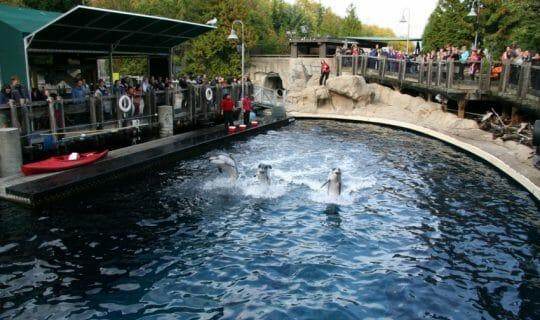 Nashvancouver-dolphin show