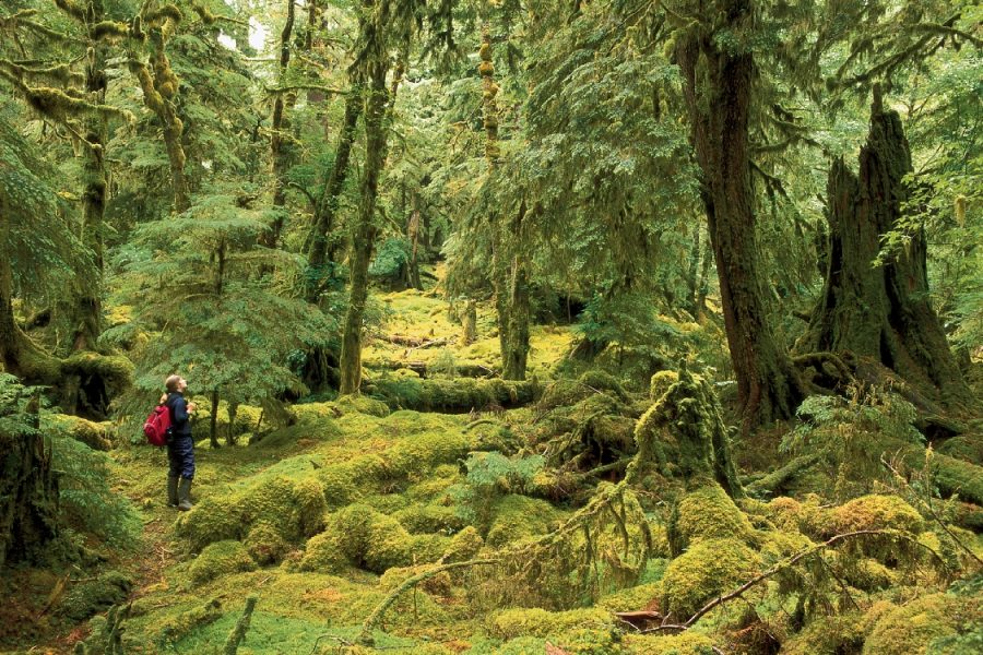 7 секретных мест Британской Колумбии,что нужно обязательно увидеть в Канаде,лучшие места Канады