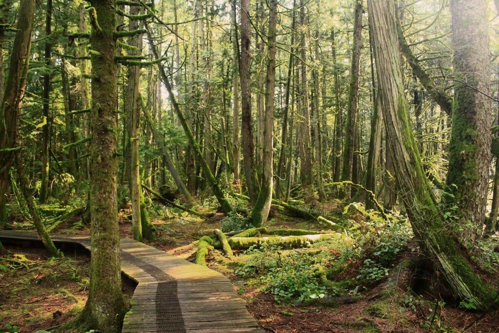 burns bog delta nature-reserve. Леса Британской Колумбии:5 мест, которые нужно посетить/Наш Ванкувер