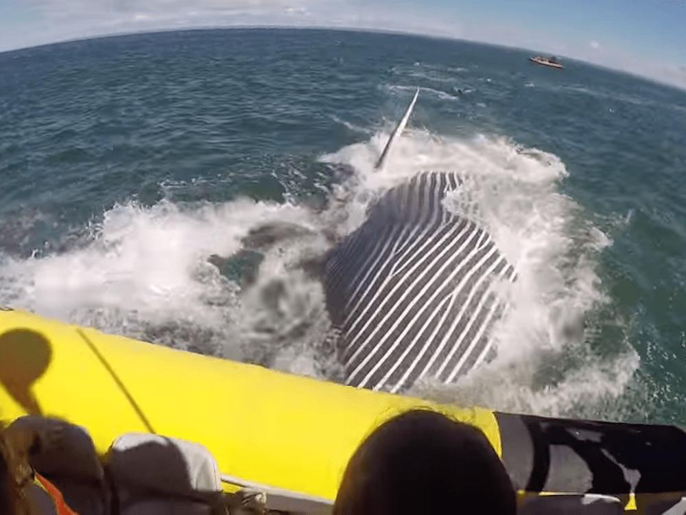 новости Канады, кит очень близко подплыл к лодке туристов