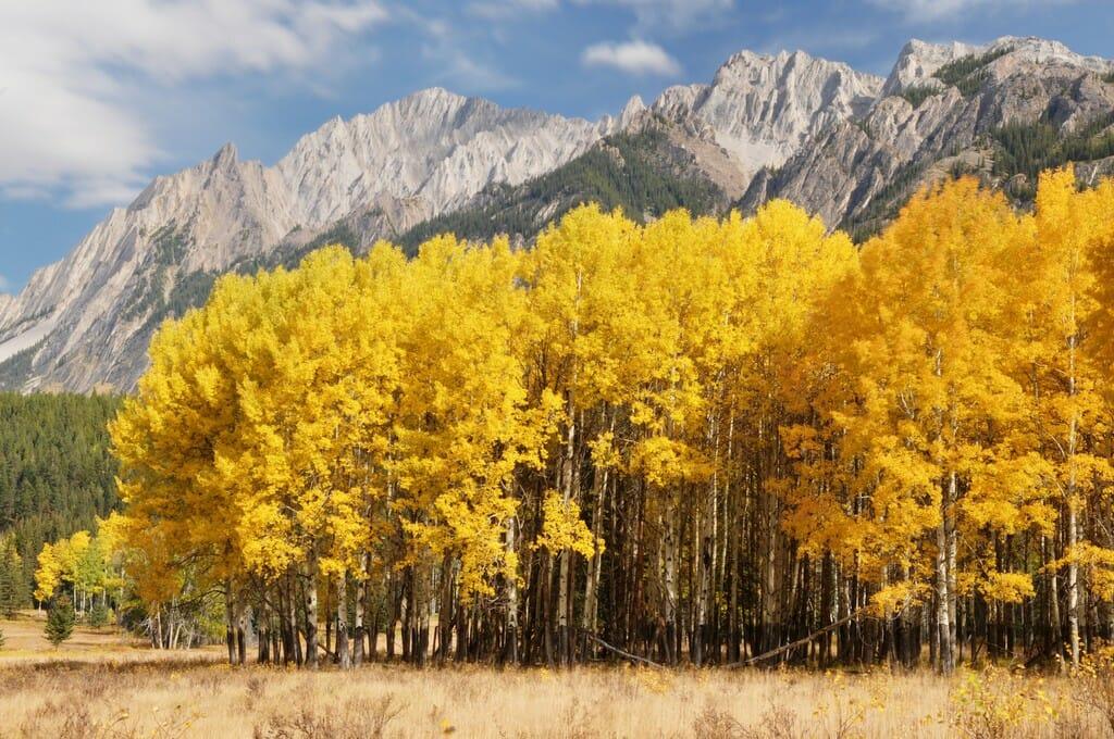 Национальный парк Банфф в Канаде, осень в парке, осень в Канаде, 9 мест, которые нужно посетить в Канаде