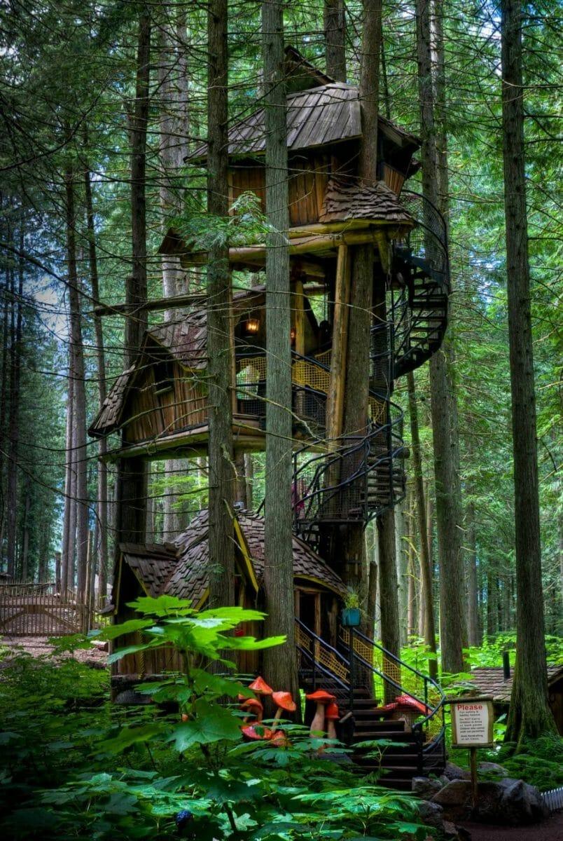 дом на дереве в лесу фото хорошей прической