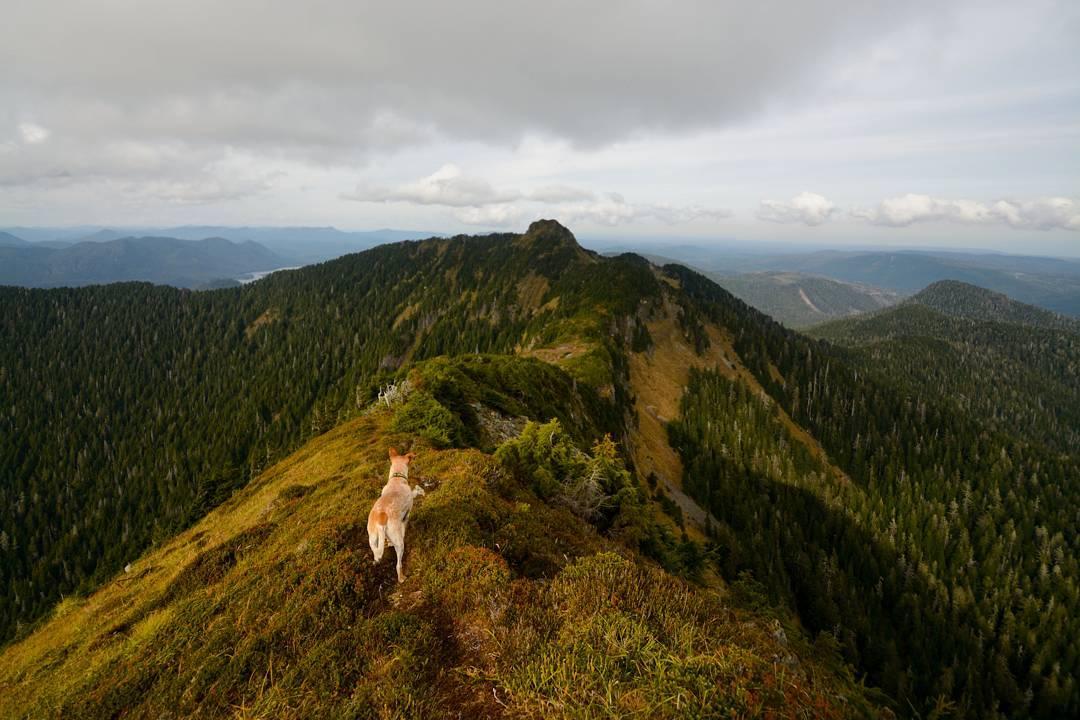 вид с горы в Канаде на Хаида-Гуаи, путешествия по Канаде, Haida Gwaii, остров в Британской Колумбии