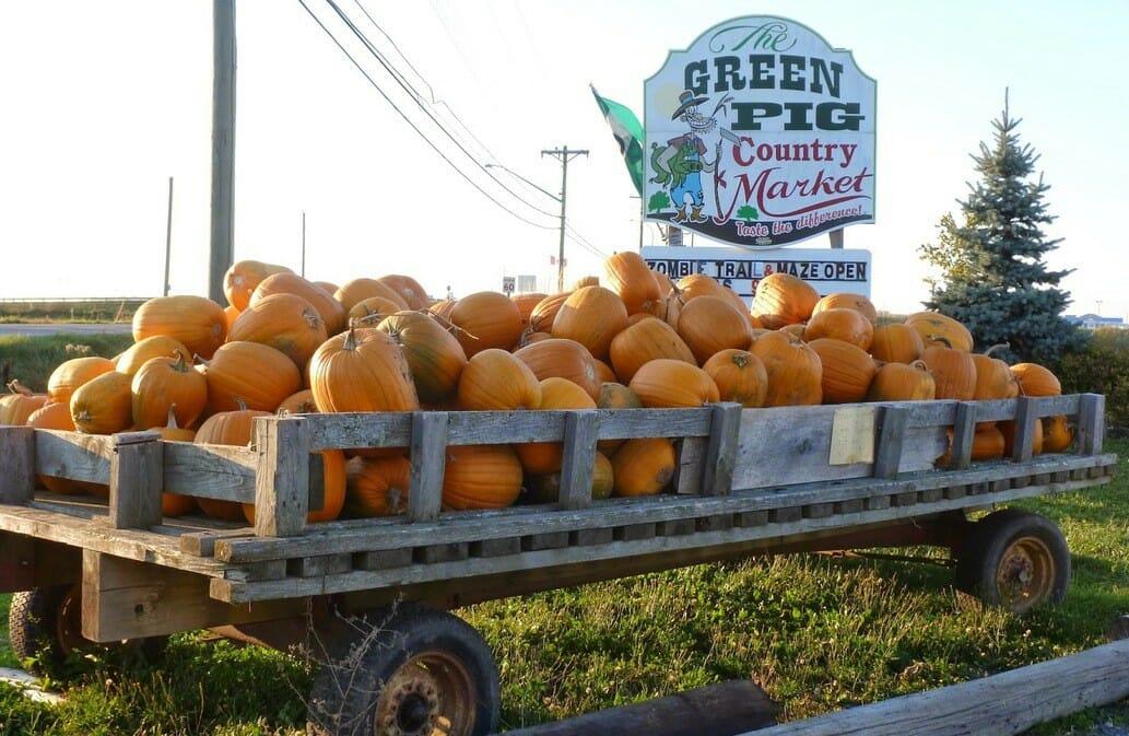 сбор тыкв, собираем тыквы, ферма в Канаде, где можно купить свежие продукты и отдохнуть с семьей