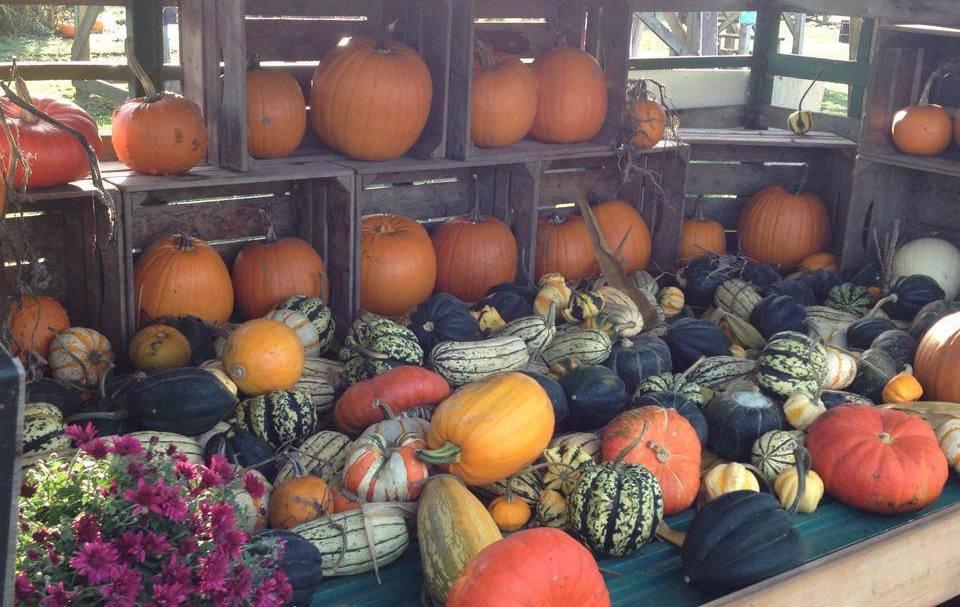 тыквенные фермы в Канаде, хэллоуин Канада