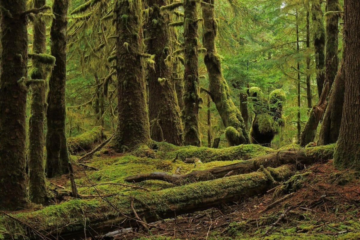 таинственный лес Хайда- Гуаи, остров в Британской Колумбии, Канада туризм, что посмотреть в Канаде, лучшие места в Канаде