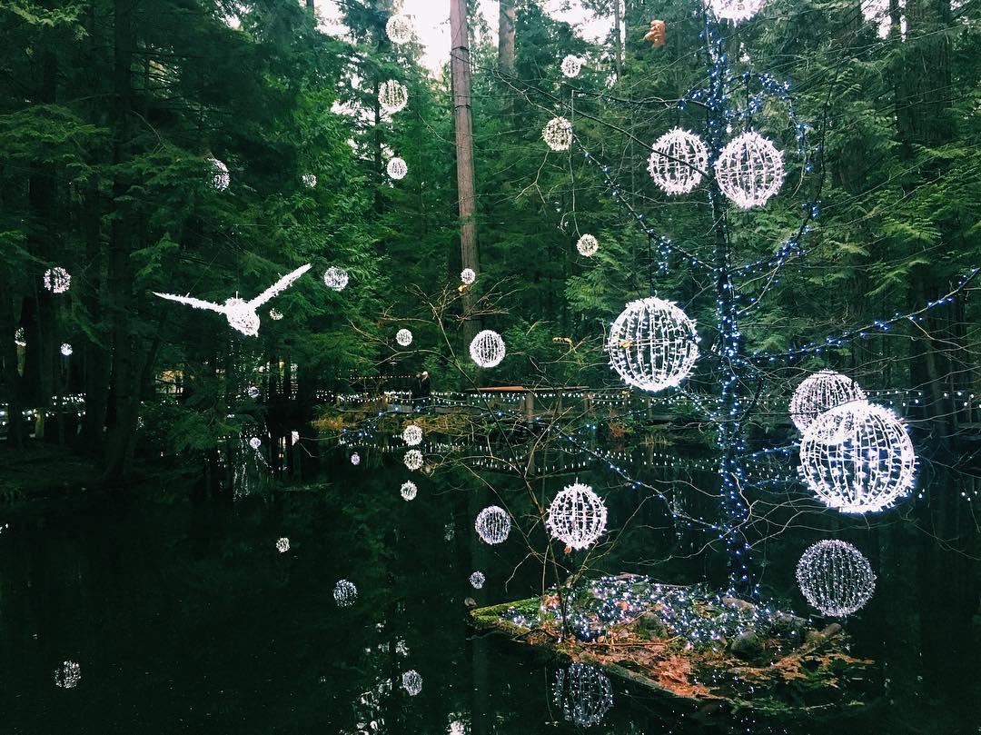 Волшебный лес,мост Капилано, подвесной мост Капилано, Ванкувер Канада