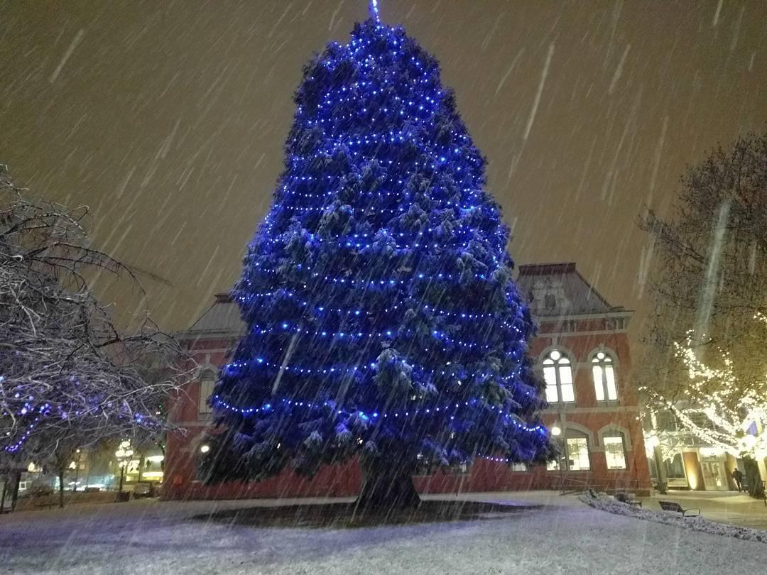 елка в Виктории, Британская Колумбия