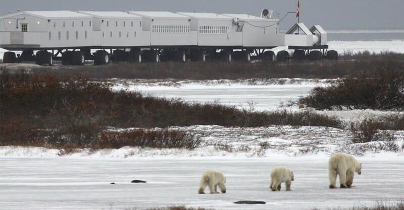 Tundra Lodge, наблюдения за белыми медведями, развлечения в Канаде