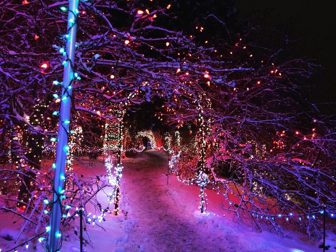 ботанический сад Ван Дусена зимой