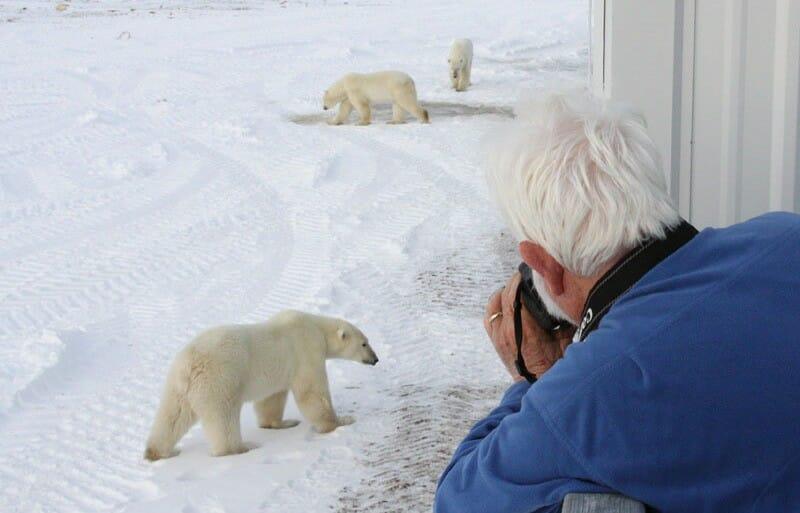 Отель Tundra Lodge, отель Манитоба, наблюдение за медведями, отдых Канада
