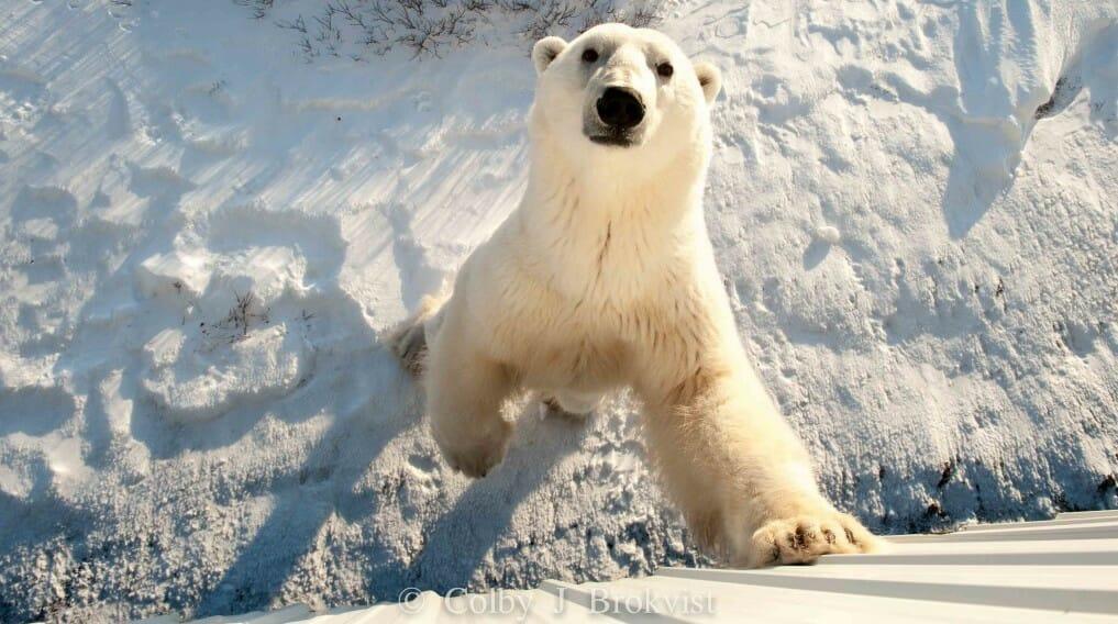 красивый кадр, медведь, отдых Канада, отель