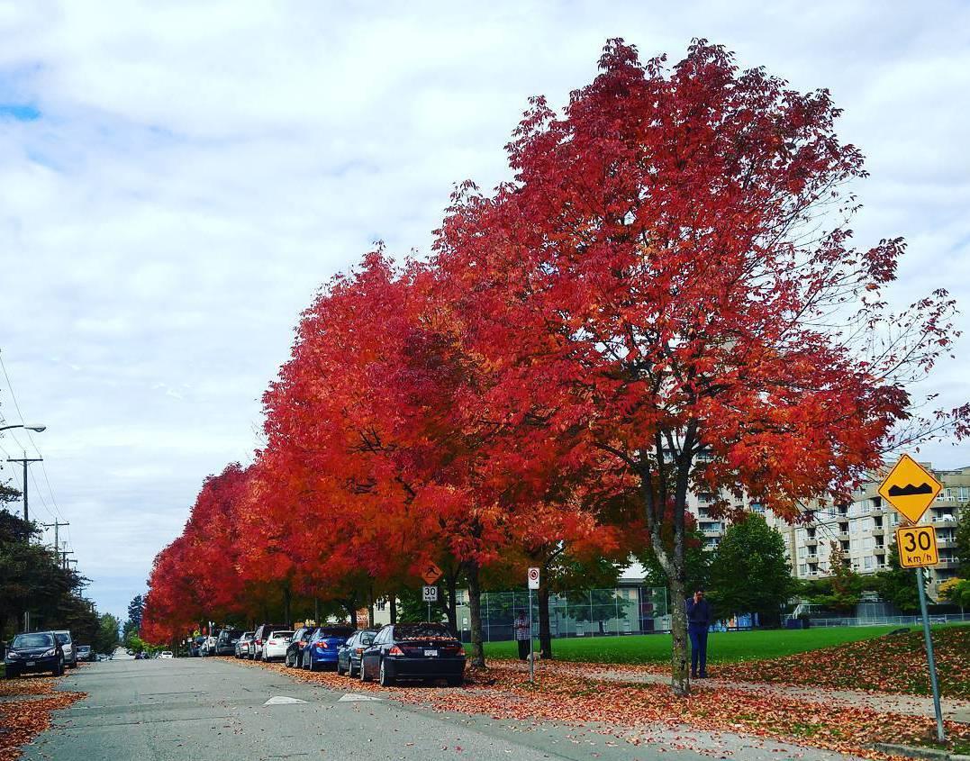 осень Ванкувер