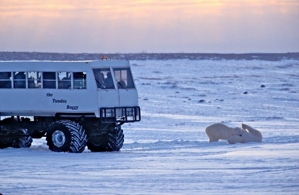 медведи в Канаде, отель на колесах