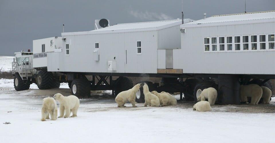 отель Канада, белые медведи Канада, Tundra Lodge