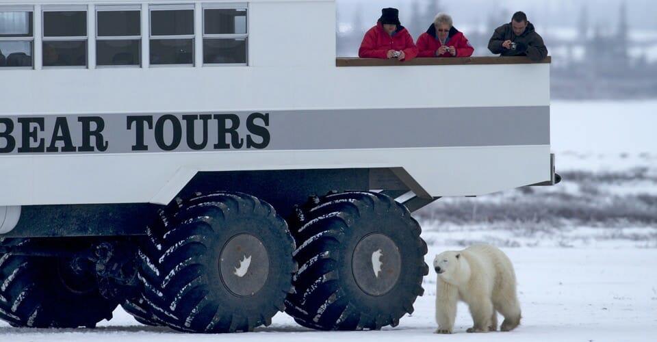 отель в Манитобе, полярный экспресс, наблюдение за медведями