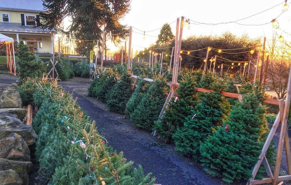 где купить елку в Ванкувере, рождество Ванкувер, Ванкувер Канада