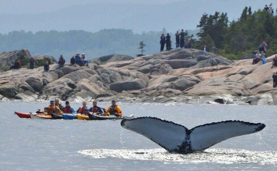 наблюдение за китами, национальный парк в Канаде, посетить бесплатно в 2017 году