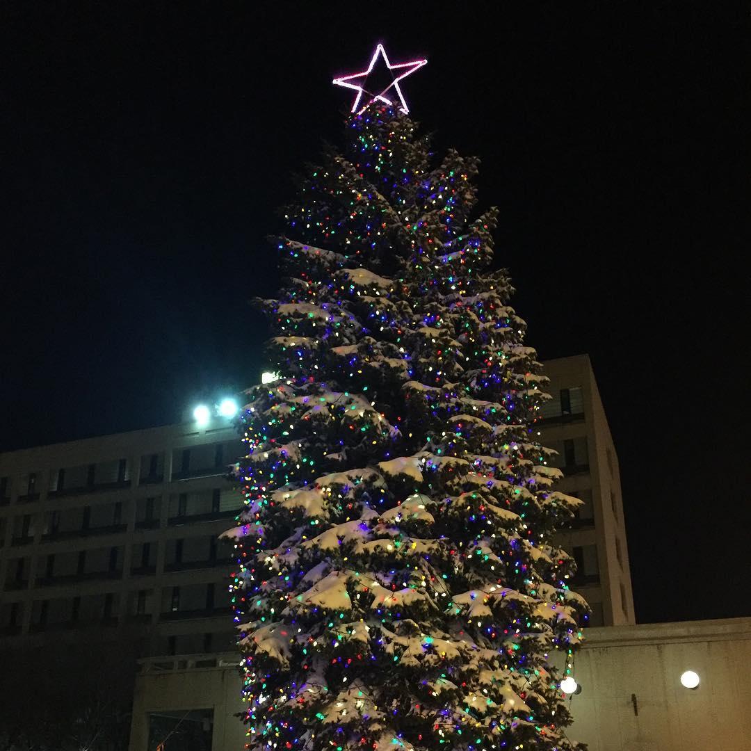 елка в Виннипеге, Виннипег Канада, рождество в Канаде