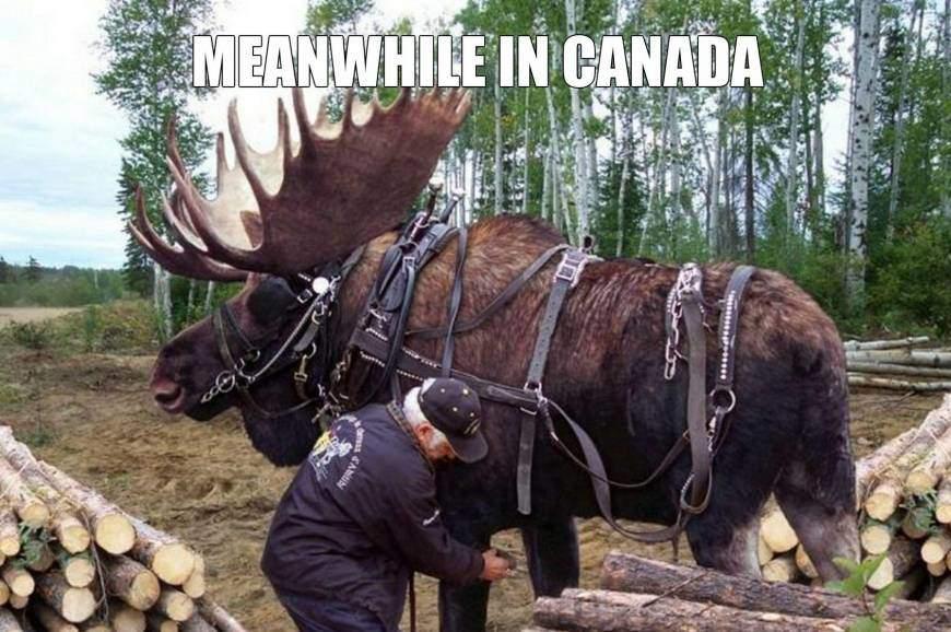 прикол, Канада, жизнь в Канаде