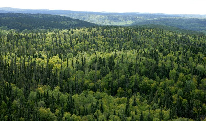 леса в Канаде, удивительные факты о Канаде
