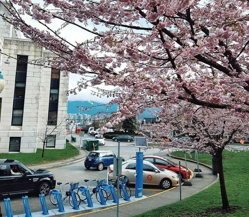 Весна в Ванкувере:сакура (фото)
