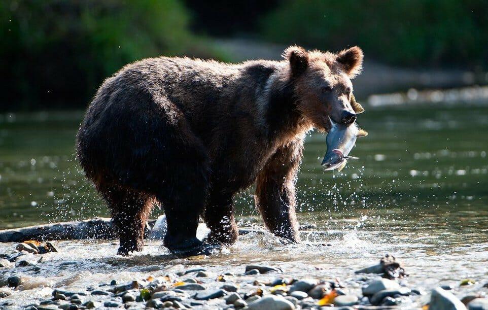 8 способов поближе познакомиться с дикими животными в Канаде