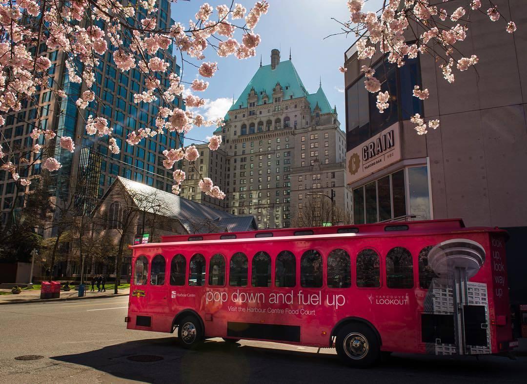 Цветение сакуры в Канаде (фото)