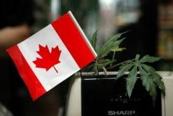 закон о легализации марихуаны в Канаде