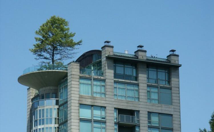 дерево на крыше в Ванкувере