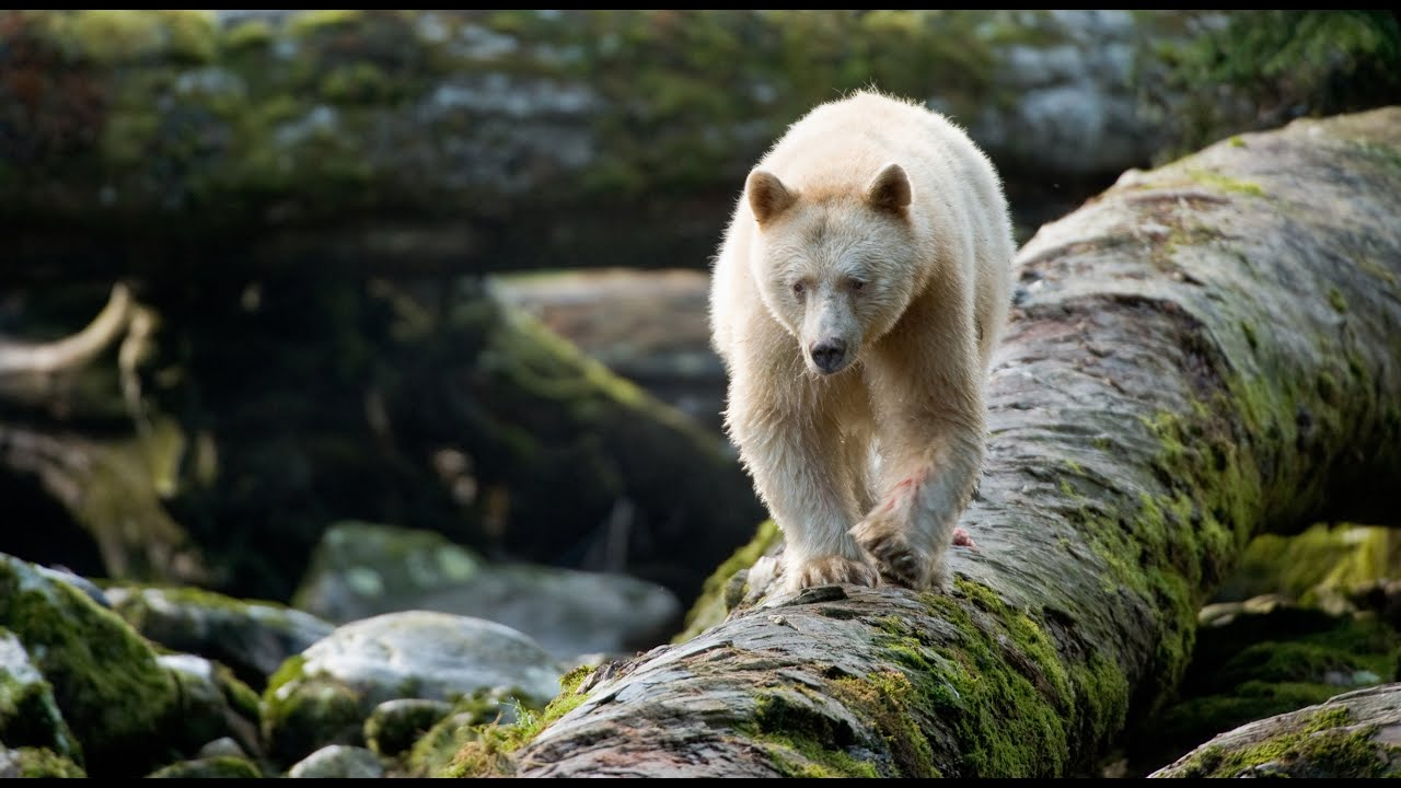 лес большого медведя