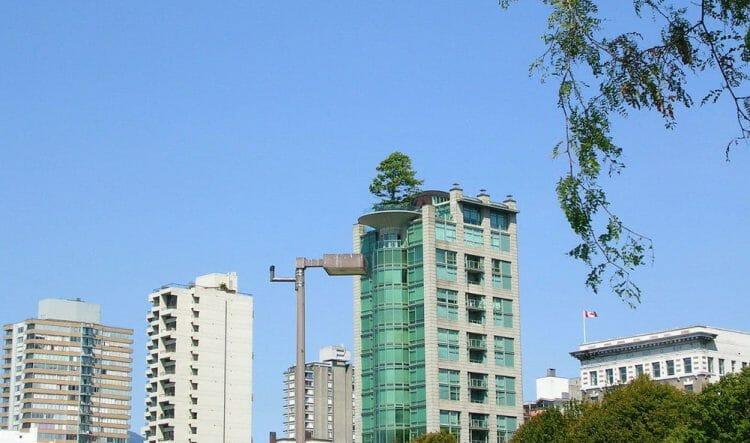 дерево на крыше дома в Ванкувере