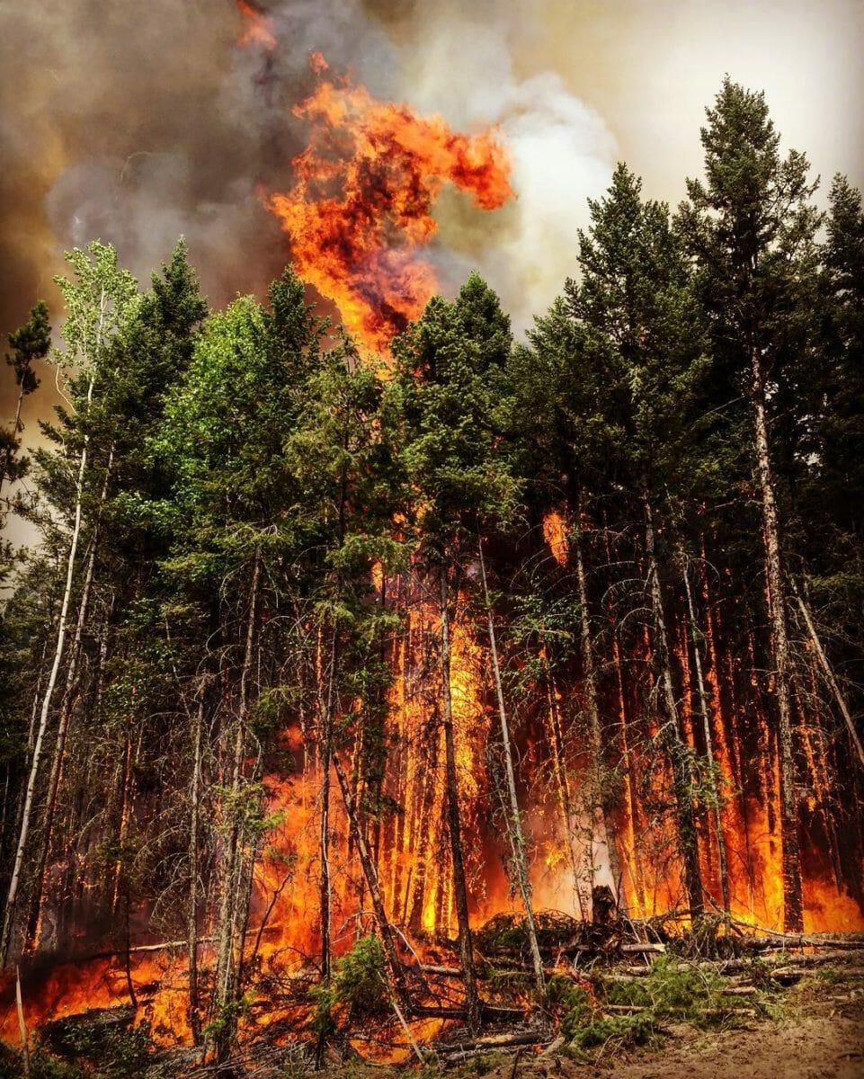 пожар в лесу в Канаде