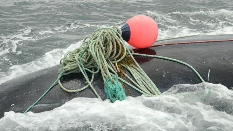 кит убил своего спасителя