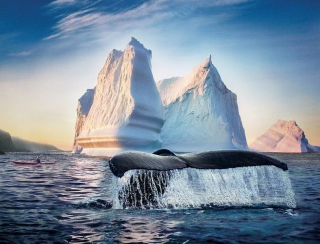 байдарки с китами в Канаде