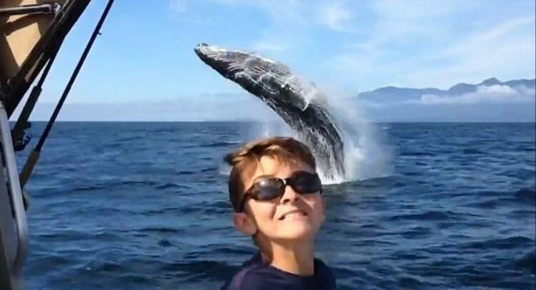 супер видео с китом