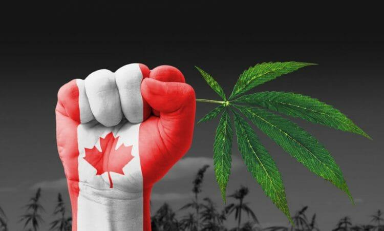 канадцы потратили 5,7 млрд на марихуану