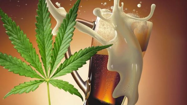 Пиво и конопля картинки новости о плантации марихуаны