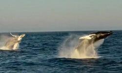 шоу китов