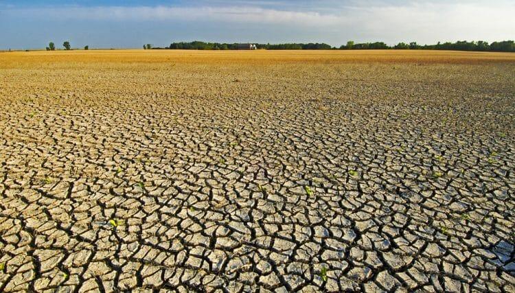 засуха в Манитобе