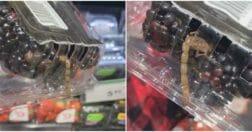 скорпион в упаковке ягод