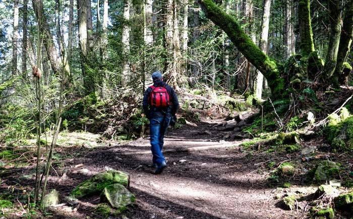 принц гарри в лесу