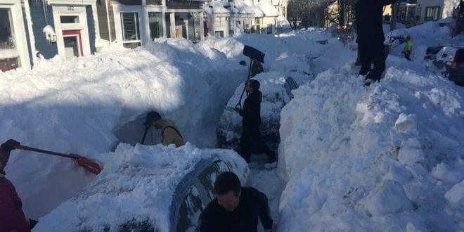 снег ньюфаундленд