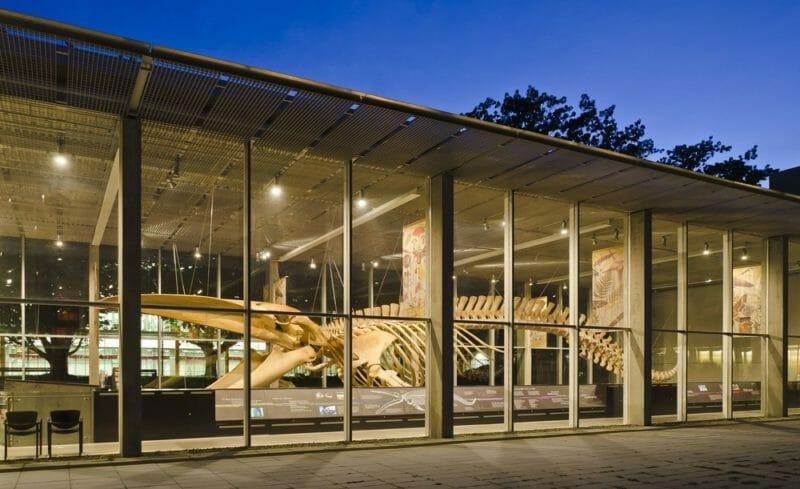 музей биоразнообразия