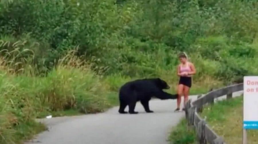 медведь пробежка