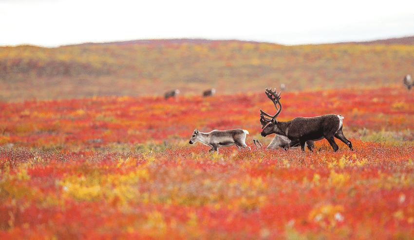 канада осенью