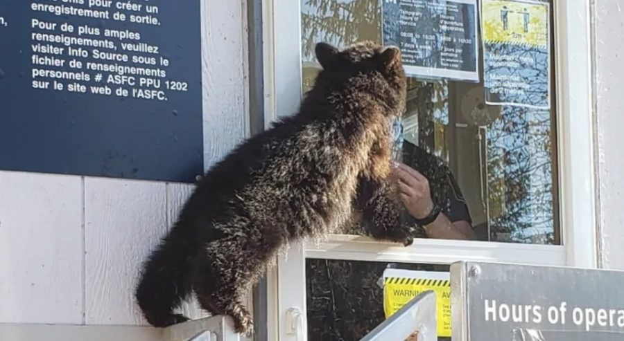 медведь граница