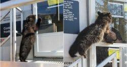 медведь канада сша