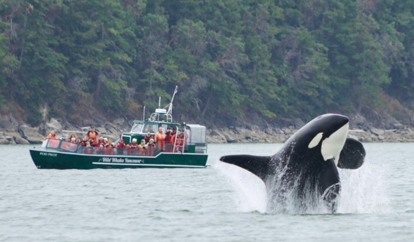 киты туры ванкувер