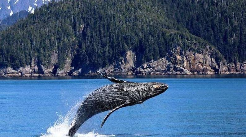 остров ванкувер киты